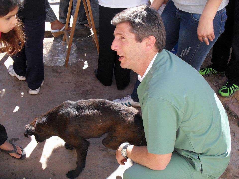 el cronograma el Zoonosis contempla la castración de perros y gatos