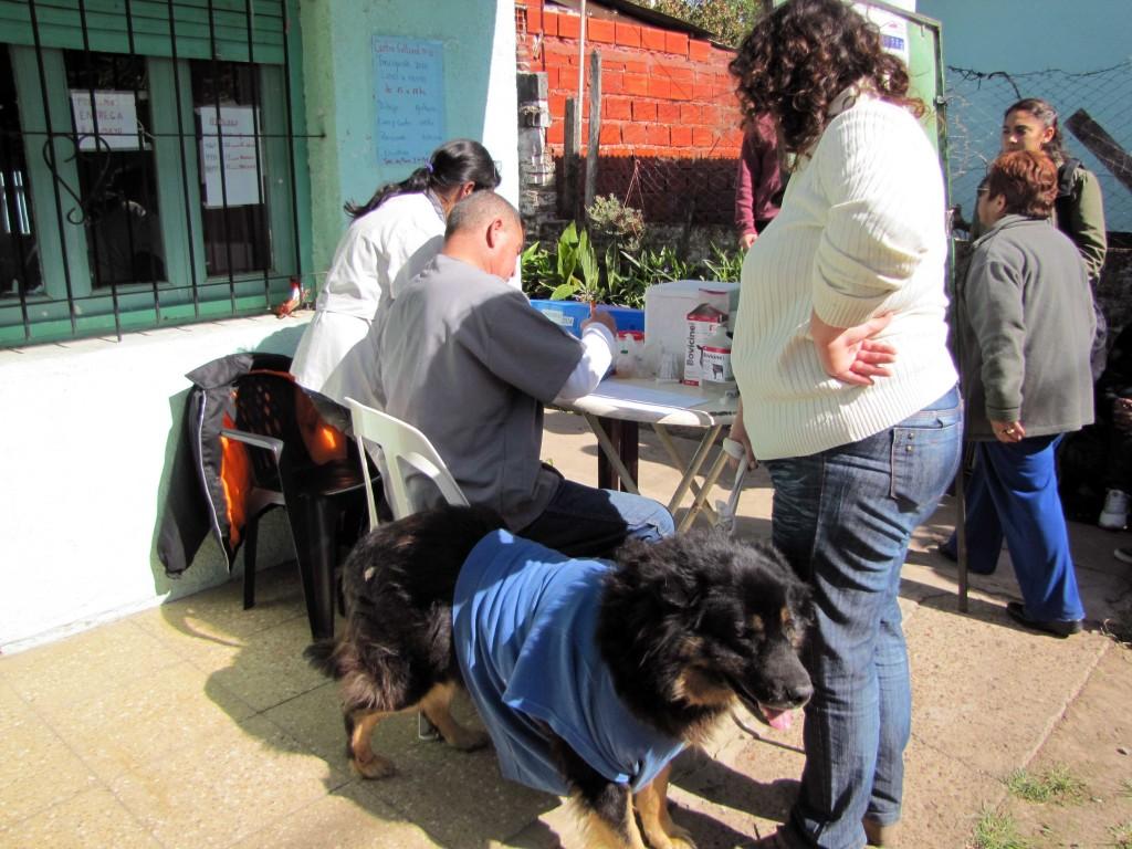 El cronograma el Zoonosis contempla la castración de perros y gatos, esterilizando a  las hembras y castrando a  los machos
